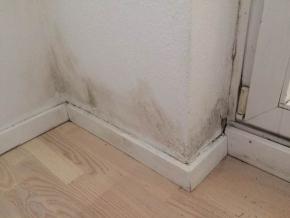 室内墙面涂料防霉保护