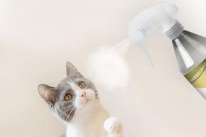 宠物除臭抗菌液